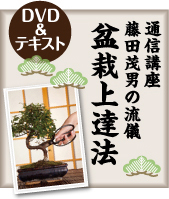 manabu_1bonsai35.jpg